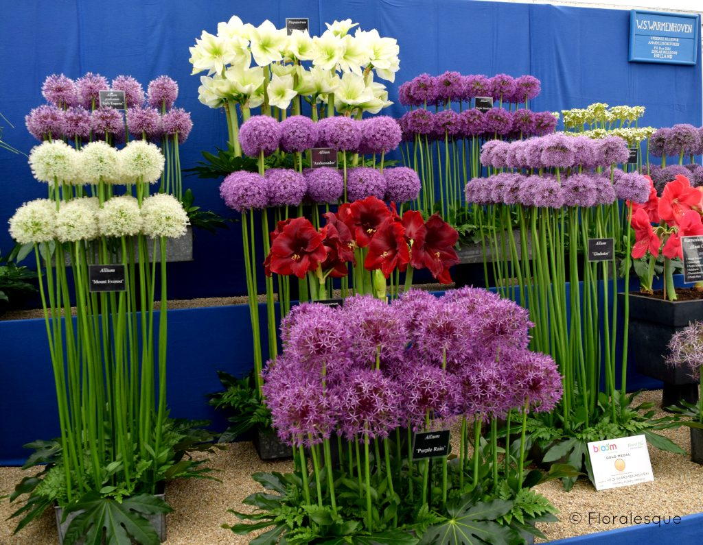 Bloom'in Brilliant - Bloom in the Park 2016 Floralesque 5
