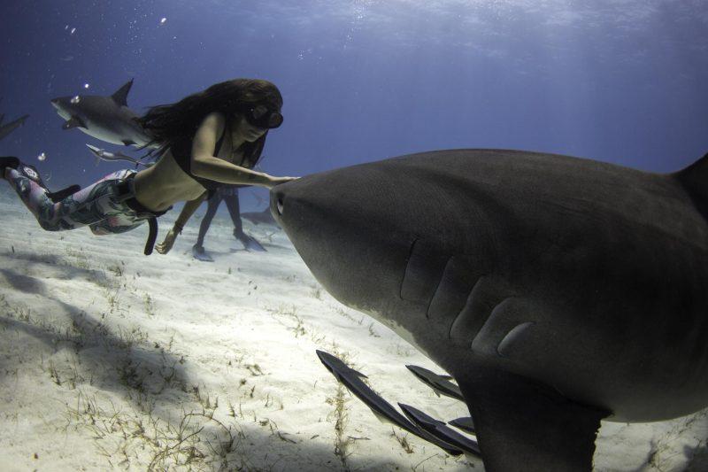 Interview with Shark Activist Madison Stewart