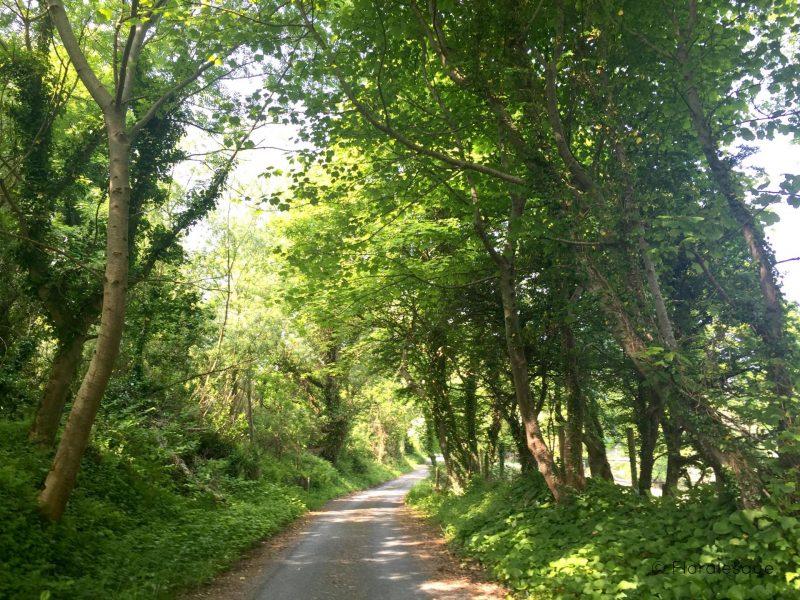 Killaspugbrone Loop, Strandhill, Co. Sligo. Floralesque 8